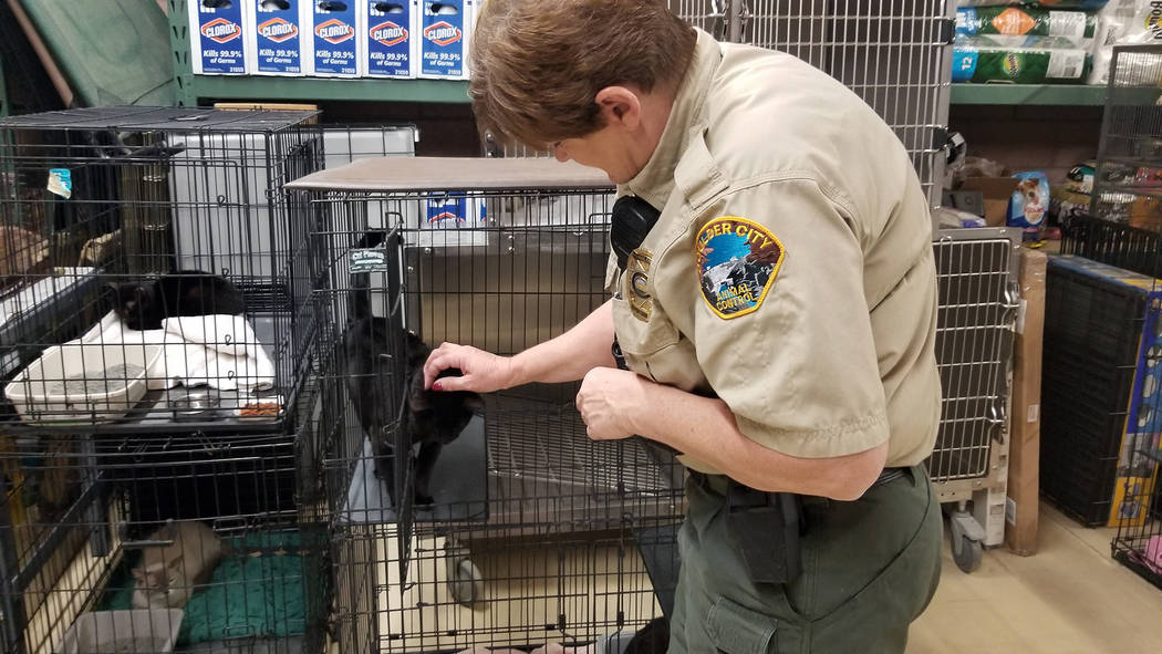 Celia Shortt Goodyear/Boulder City Review Animal Control Supervisor Ann Inabnitt interacts with ...