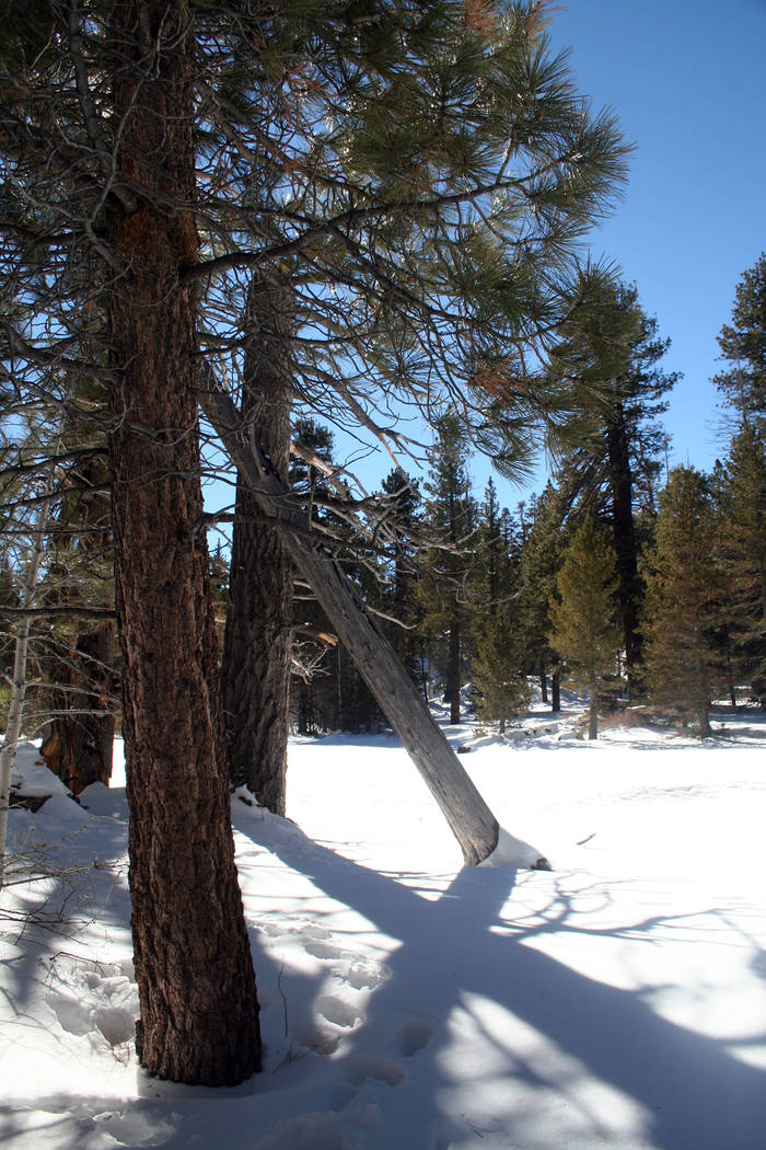 (Deborah Wall) Visitors who take the Palm Springs Aerial Tramway in winter are usually pleasant ...