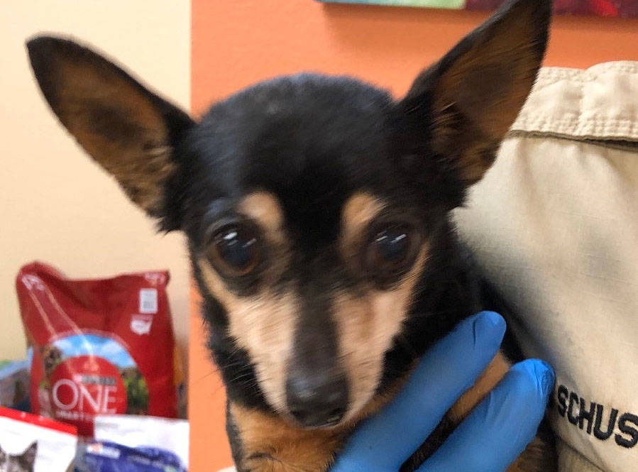 (Boulder City Animal Shelter) Lupita was abandoned near the dry lake bed off of U.S. Highway 95 ...