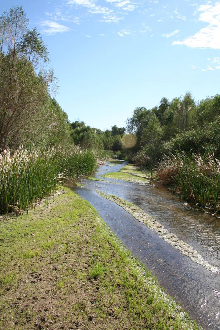 (Deborah Wall) The Hassayampa River flows year-round through the 770-acre Hassayampa River Pres ...