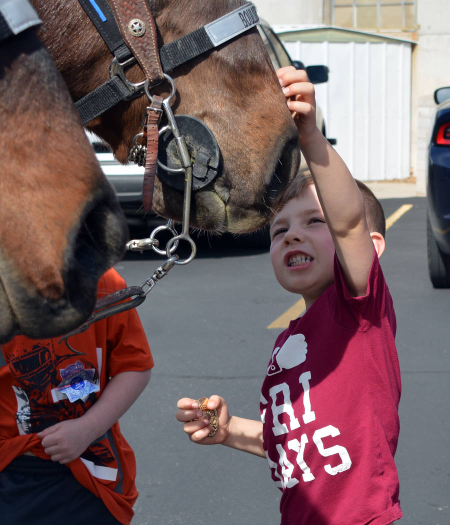 (Celia Shortt Goodyear/Boulder City Review) Everett Ubbens pets Odie, a horse with the Boulder ...