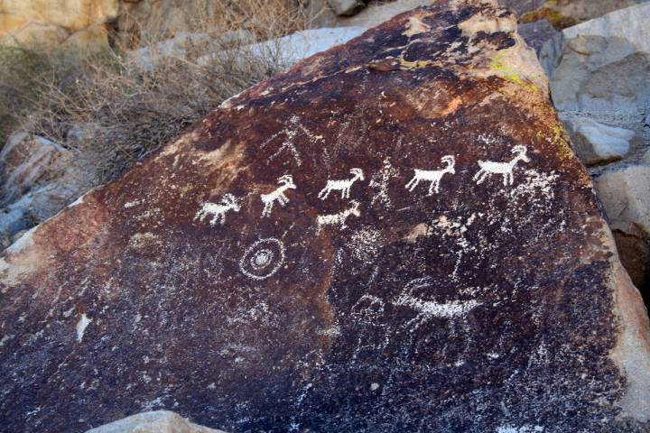 (Deborah Wall) This petroglyph panel of bighorn sheep can be found in Grapevine Canyon in Lake ...