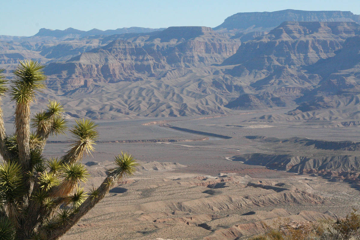 (Deborah Wall) A lone Joshua tree sits atop a mesa overlooking the Colorado River near Pearce F ...