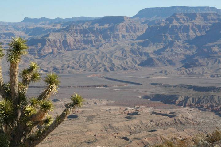 (Deborah Wall) A lone Joshua tree sits atop a mesa overlooking the Colorado River near Pearce F ...
