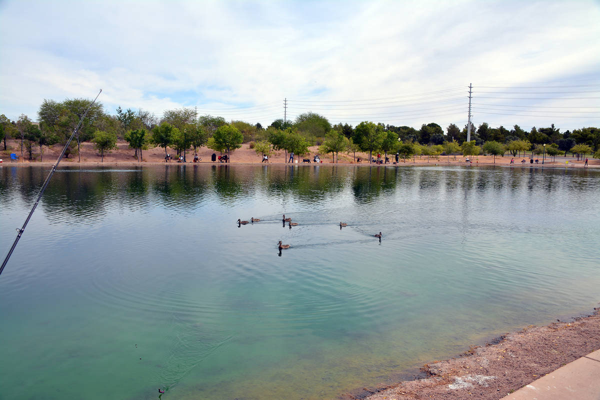 (Celia Shortt Goodyear/Boulder City Review) Ducks on the pond at Veterans Memorial Park didn't ...