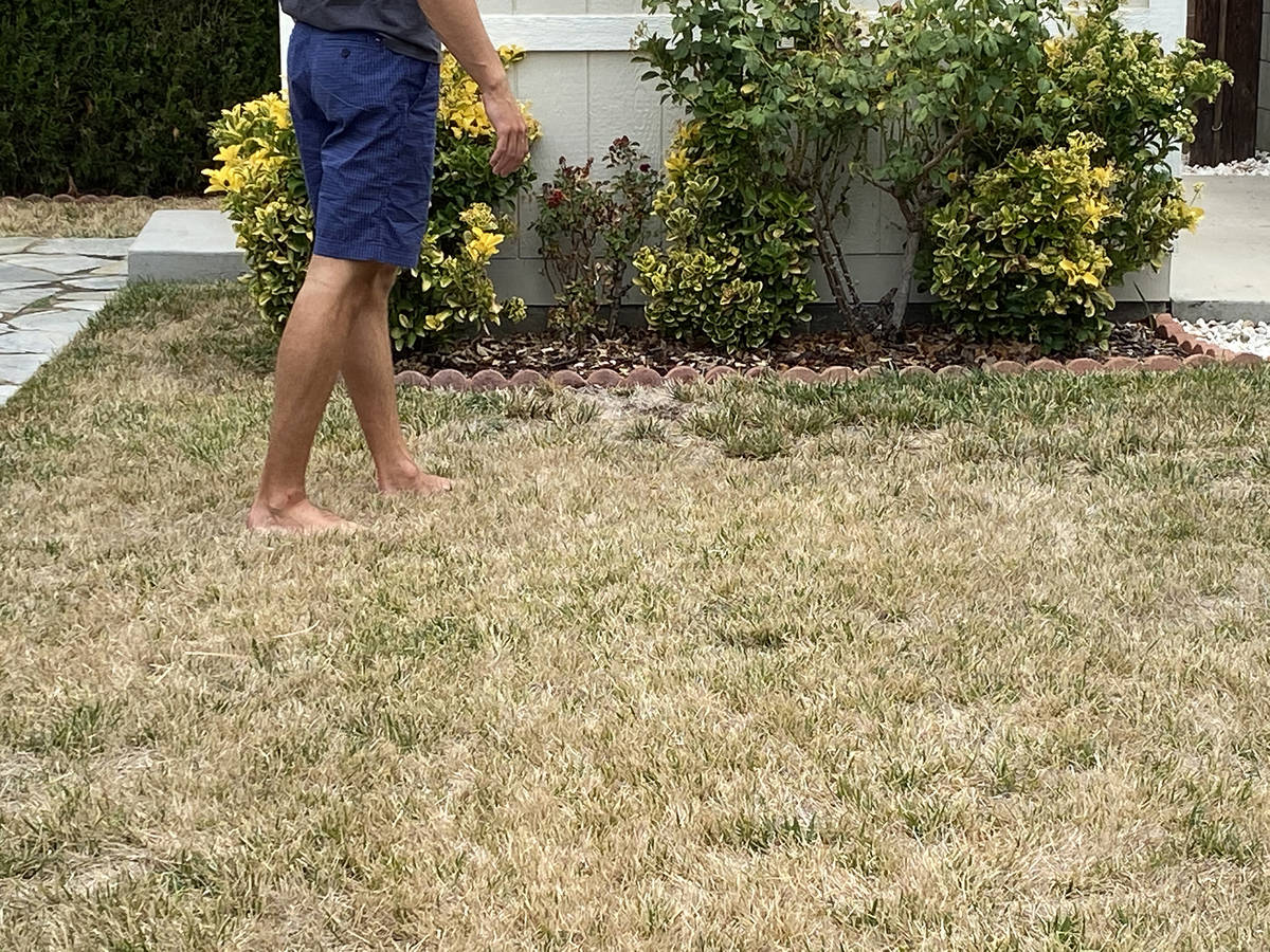 (Norma Vally) Proper watering, fertilization and mowing practices can keep your lawn healthy du ...