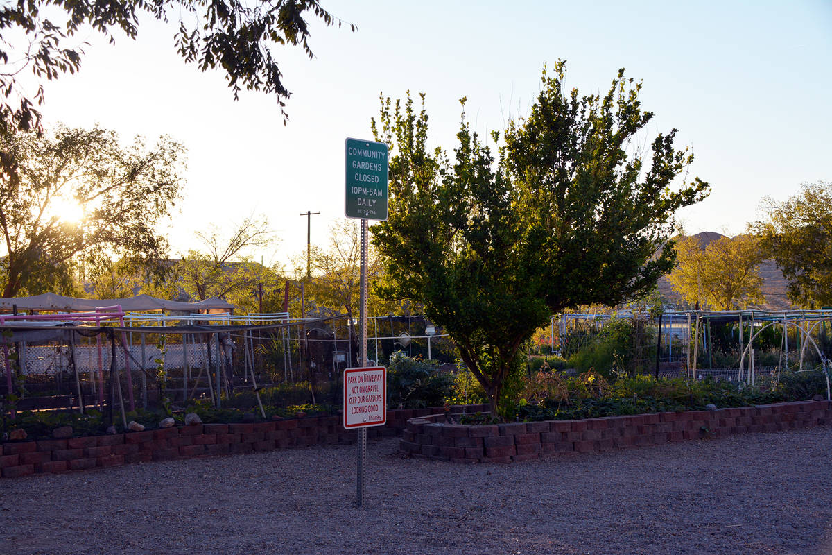 Celia Shortt Goodyear/Boulder City Review Local gardener Cheryl Waites is hosting Autumn Day in ...