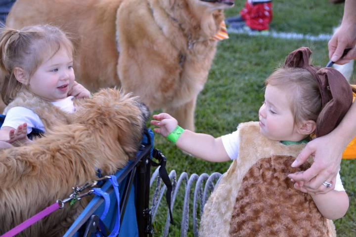 Harper Risalvato, left, and her sister Olivia, pet a dog named Teddy at the 2019 Trunk or Treat ...