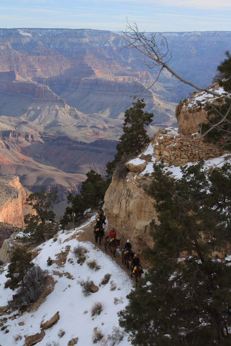 (Deborah Wall) A mule train heads down the Bright Angel Trail in the Grand Canyon National Park ...