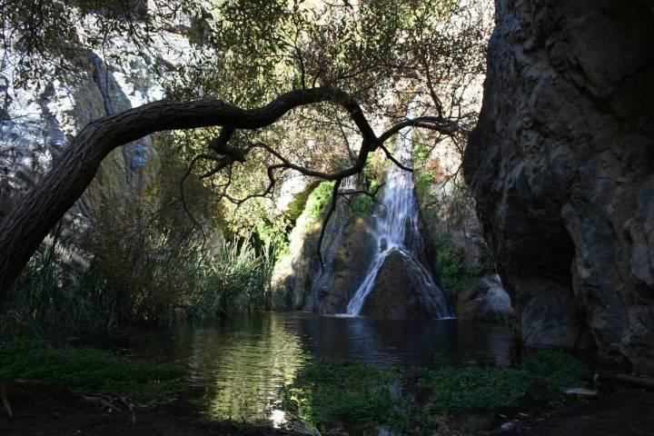 (Deborah Wall) A canopy of tree branches shades the pool below Darwin Falls in Death Valley Nat ...