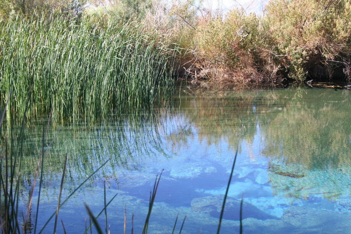 (Deborah Wall) There are 30 seeps and springs at Ash Meadows National Wildlife Refuge in Nevada ...