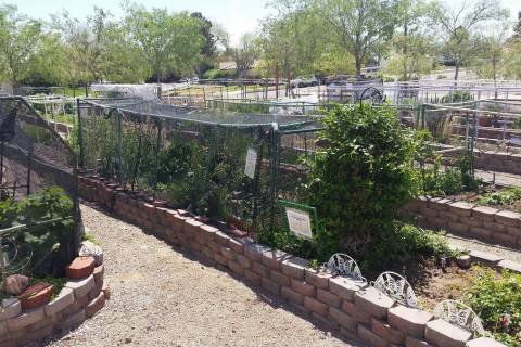 Boulder City's community gardens on Railroad Avenue will be showcased during a tour of local ga ...