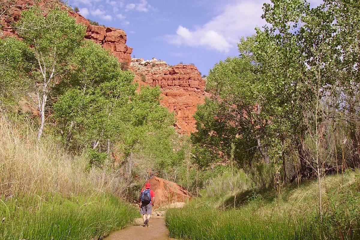 Streambed serves as scenic trail through Hackberry Canyon, Utah