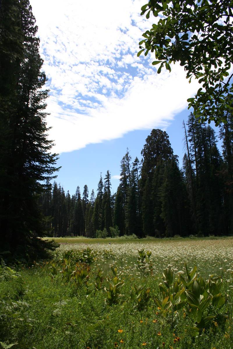 "(Deborah Wall) Naturalist John Muir called Sequoia National Park's Crescent Meadow ""The Gem o ..."