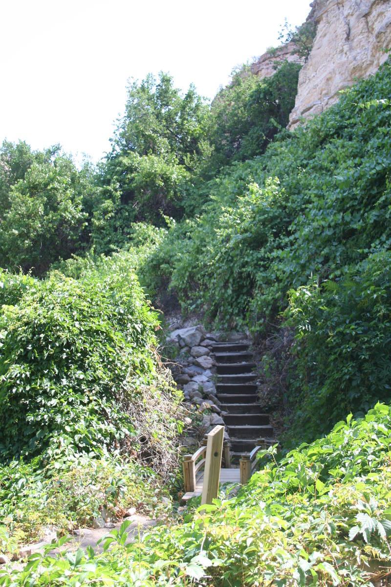 (Deborah Wall) Canyon grapes flourish along the cliff walls at Kershaw-Ryan State Park in Linco ...