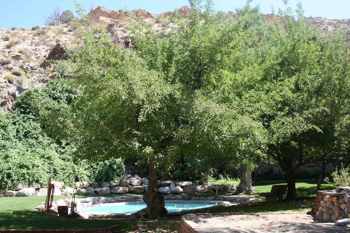 (Deborah Wall) The spring-fed wading pool was built by the Civilian Conservation Corps and is o ...
