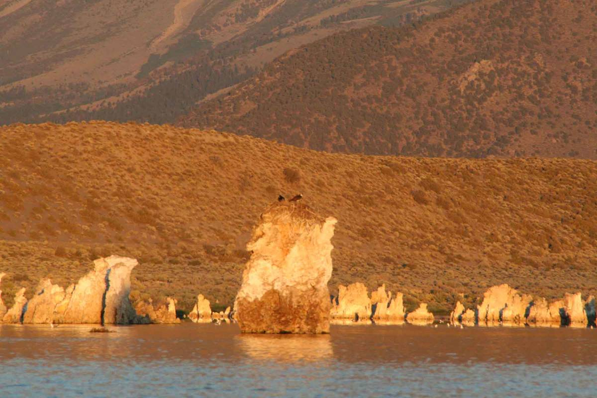 (Deborah Wall) Some osprey nest on the tufa towers in California's Mono Lake for safety ...