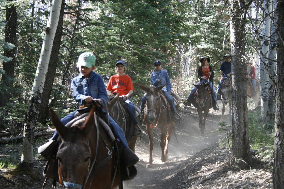 (Olivia Wall) Grand Canyon Trail Rides offers three different excursions on mules that last fro ...