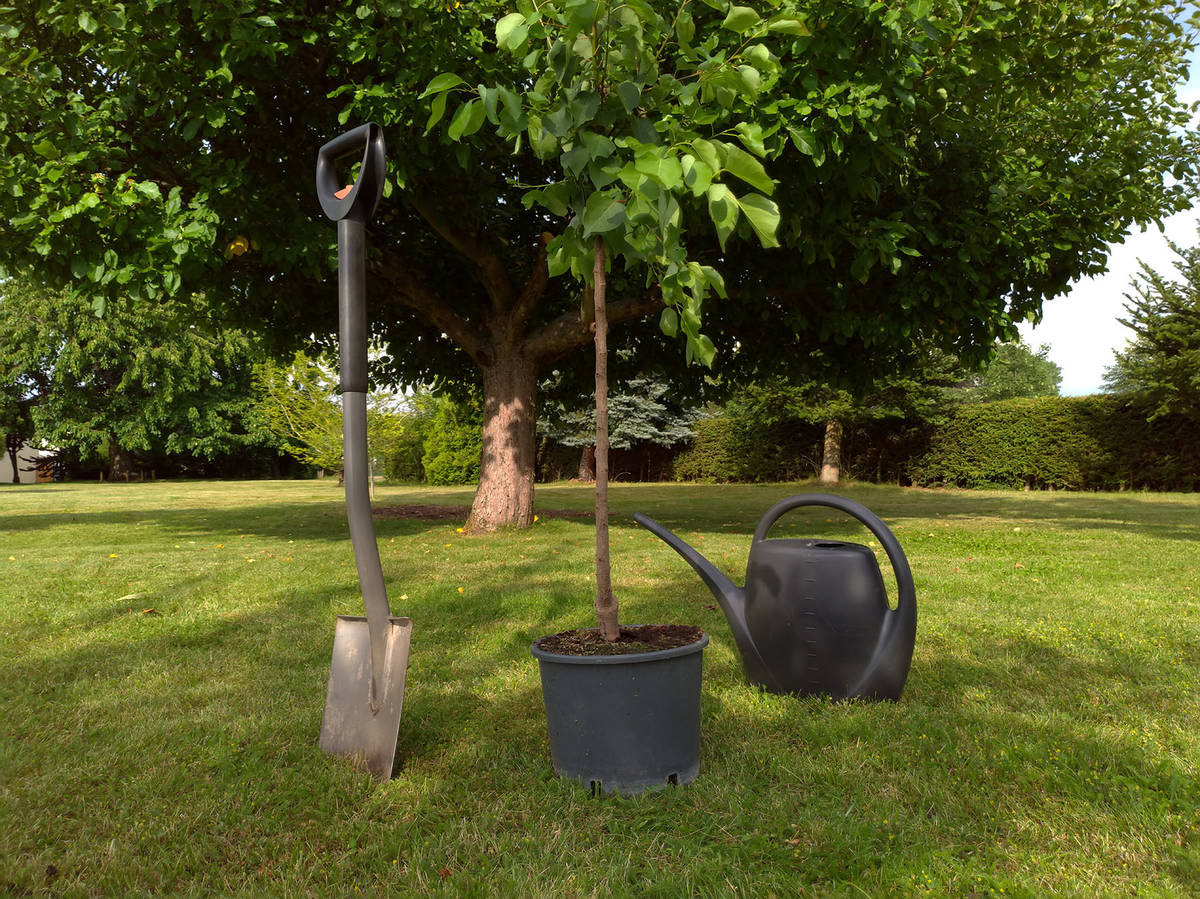 (Getty Images) It's best to plant new trees or shrubs in spring and fall's cooler ...