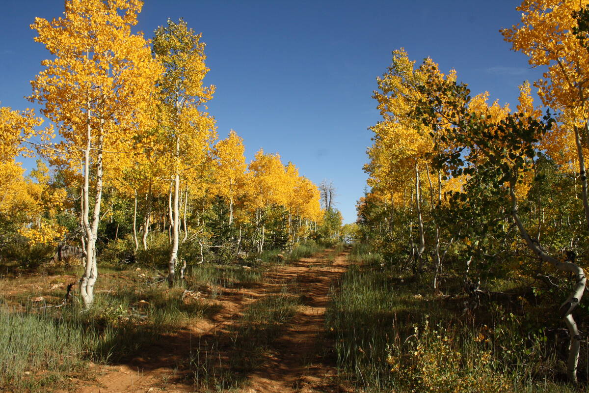(Deborah Wall) Most of the Markagunt Plateau is around 10,000 feet in elevation and is one of t ...