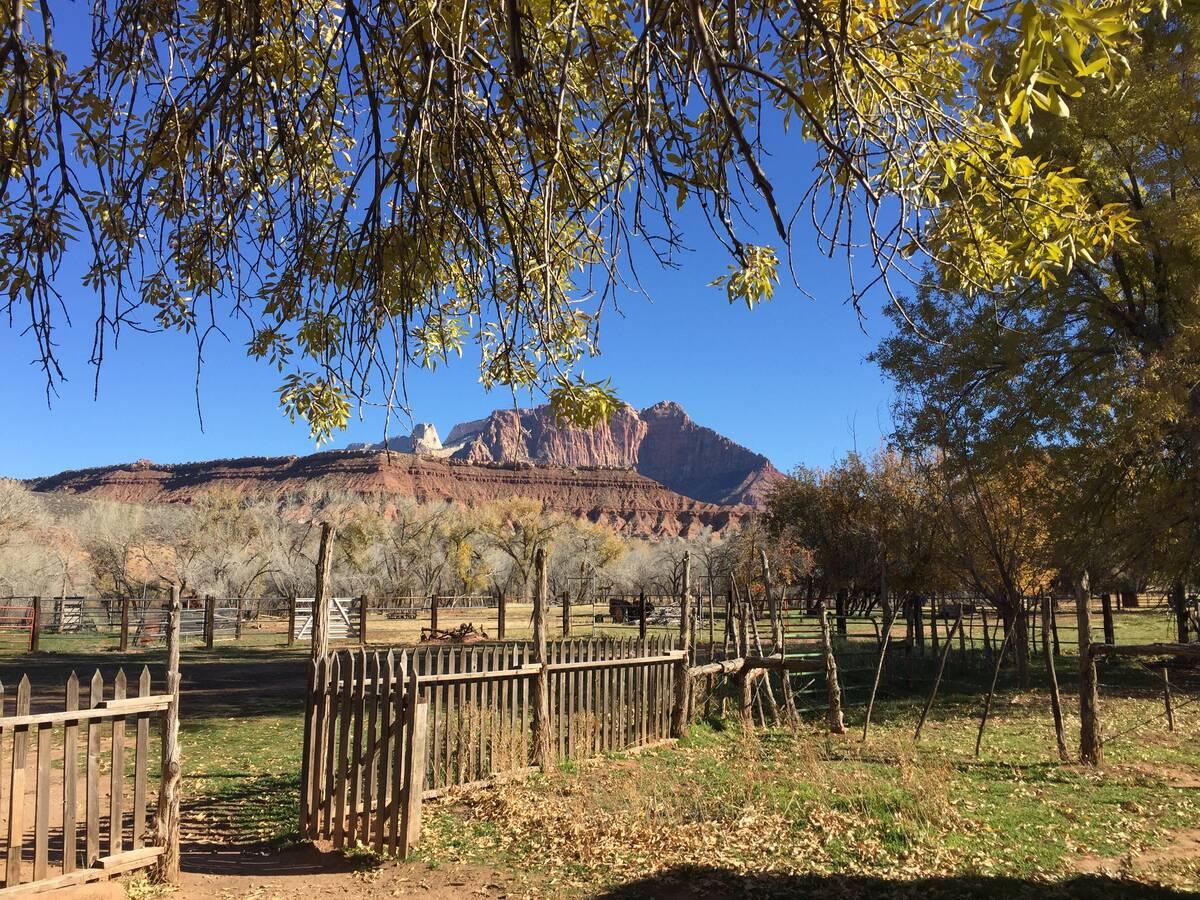 (Deborah Wall) Grafton has one of the best views of Zion's Mount Kinesava in Utah.